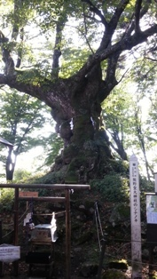 20121015kumano3.jpg