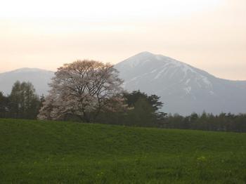 090501shizu2.JPG