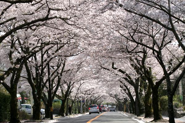 伊豆高原桜まつりコンサート.jpg