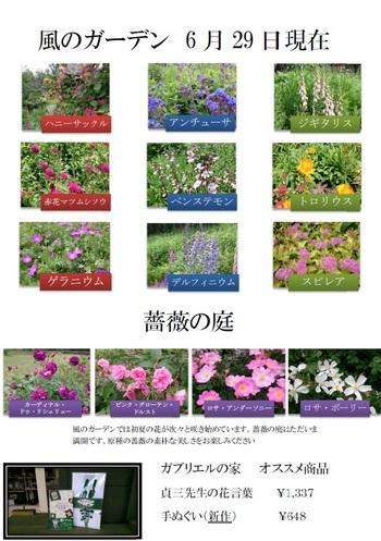 2016.6.29.jpg