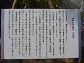 090609bakaukeinari2.jpg