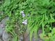 090616hakkaisan_hana6.jpg