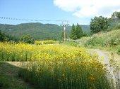 20101001yanagiba1.jpg