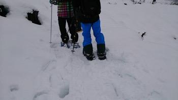 2016_snowshoe_2.jpg