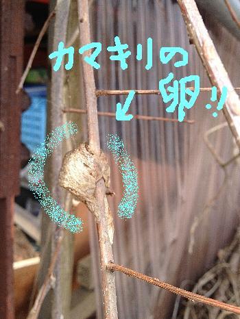 IMG_1170_20120410_4b.JPG