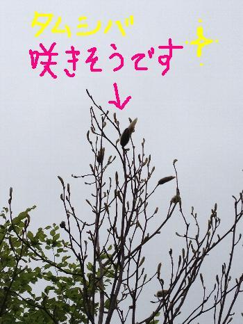 IMG_2177_20120619_4b.JPG