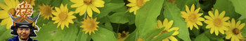 ai_september_yellow2.jpg