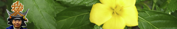 ai_september_yellow3.jpg