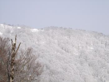 20100205shizu3.jpg